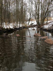 Akerselva har fått steiner som stikker opp av elvevannet