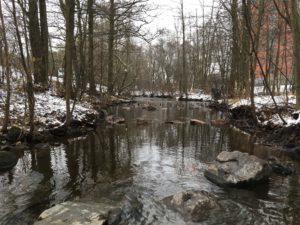 Steiner i Akerselva gir bedre habitat for fisk og kreps